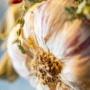 Soupe à l'ail de Provence et aux Epices Rabelais